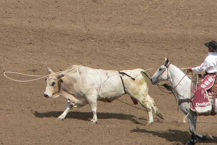 Photograph taken during the California rodeo, Salinas, 2006 edition Copyright © 2006 David Monniaux