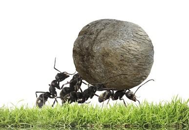 Hard work ants team